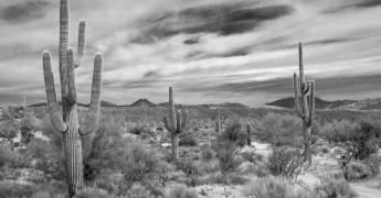 Cactus, desert, resilience