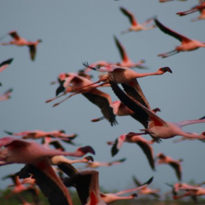 Flock of birds, Google Floc